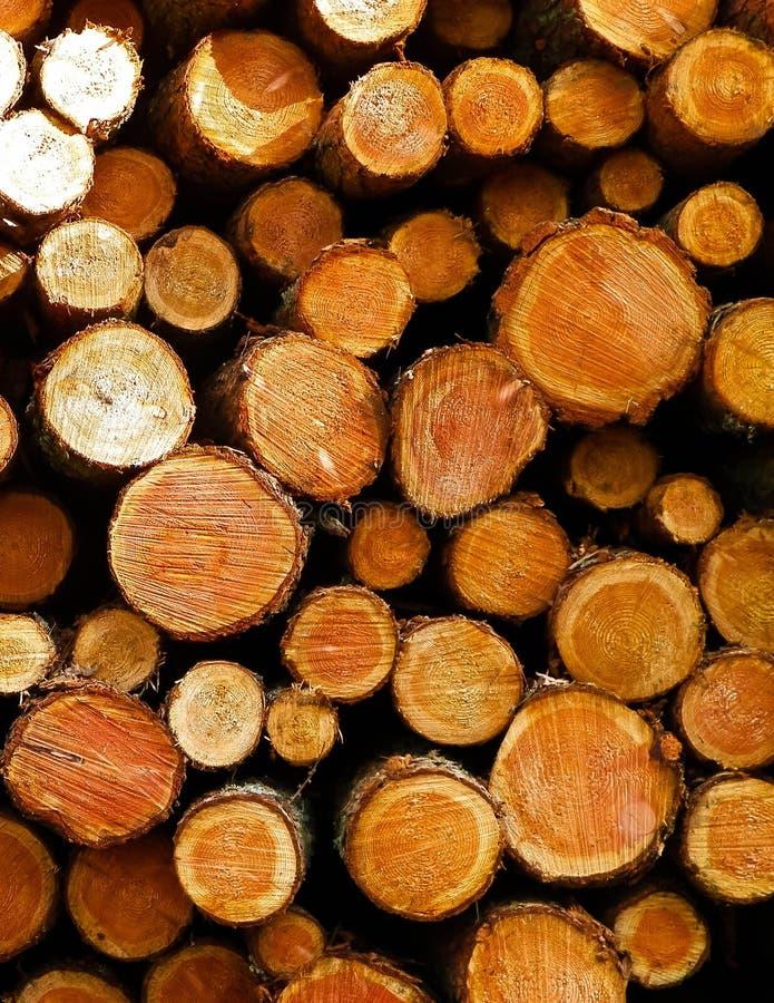 Зазор леса - деревянные балки как предпосылка природы стоковые изображения rf