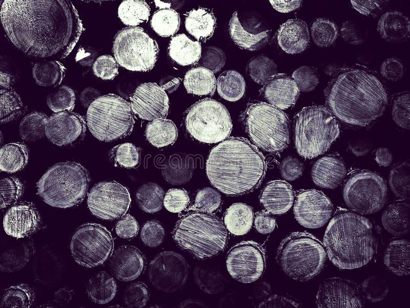 Зазор леса - деревянные балки как предпосылка природы стоковые фотографии rf