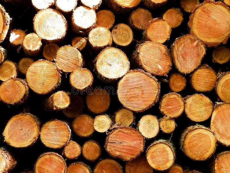 Зазор леса - деревянные балки как предпосылка природы стоковая фотография rf