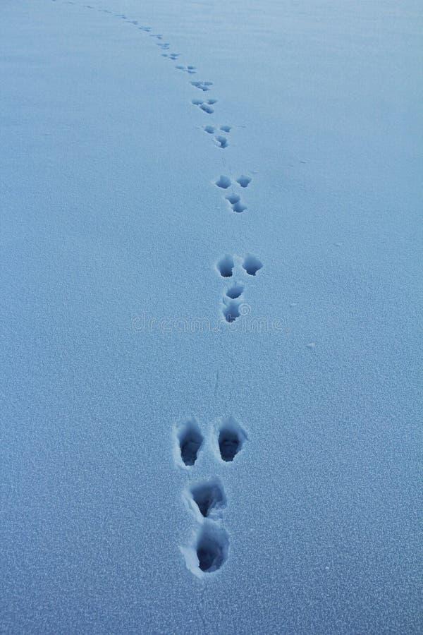 Зайцы в зиме стоковое фото