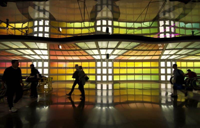 зайцы o chicago авиапорта стоковые изображения rf