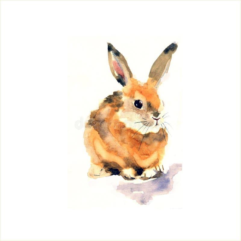 Зайчик акварели на белой предпосылке бесплатная иллюстрация