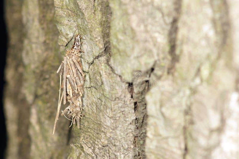 Закамуфлированная гусеница стоковая фотография rf