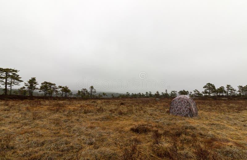 Закамуфлированный охотящся слепое готовое для охоты фотографии на месте lek тетеревиных стоковые фото