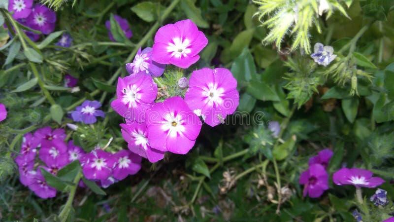 заканчивать этот симпатичный цветок стоковые изображения