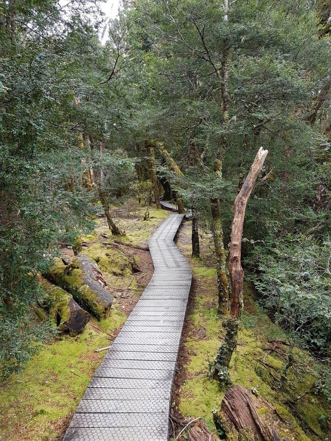 Заколдованная гора Тасмания Австралия вашгерда прогулки леса стоковое фото