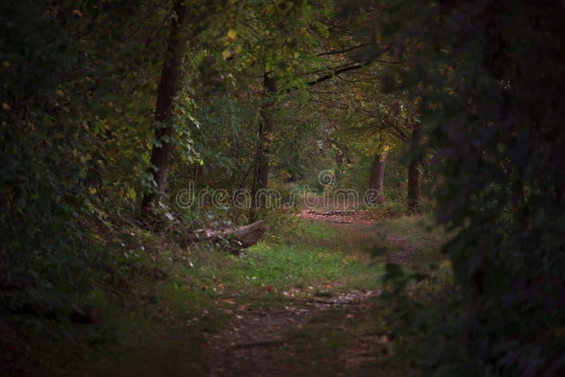 заколдованные древесины стоковое фото