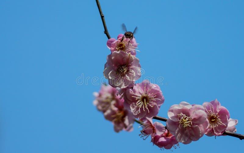 Заколдовывая красота чистой и свежего и свободного от лилии вульгарности стоковая фотография