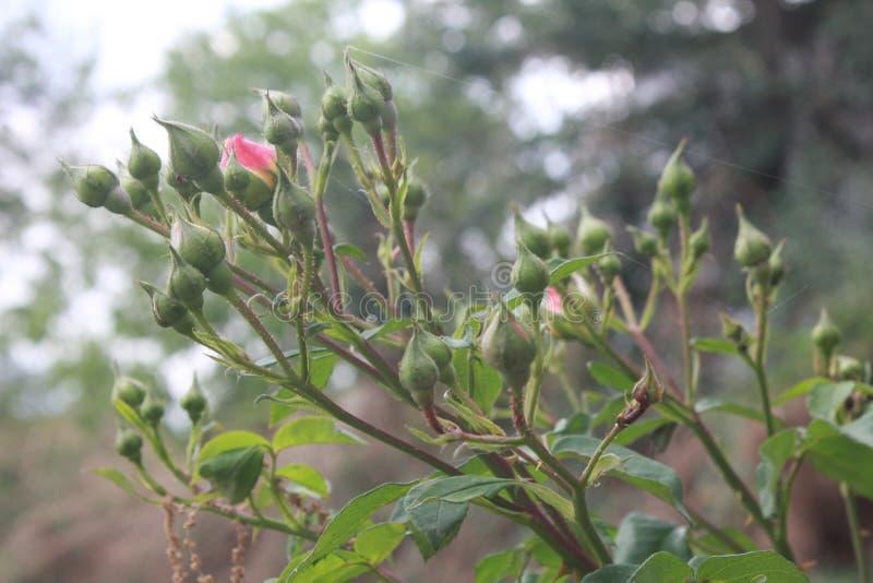 Заколдовывая красочные цветок и бутон стоковое фото rf