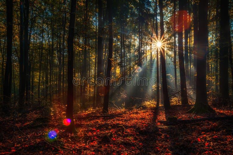 Заколдованная осень Forrest стоковая фотография rf