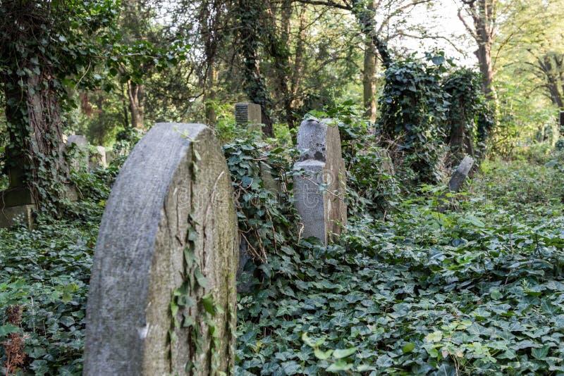 Заколдованное кладбище стоковая фотография rf