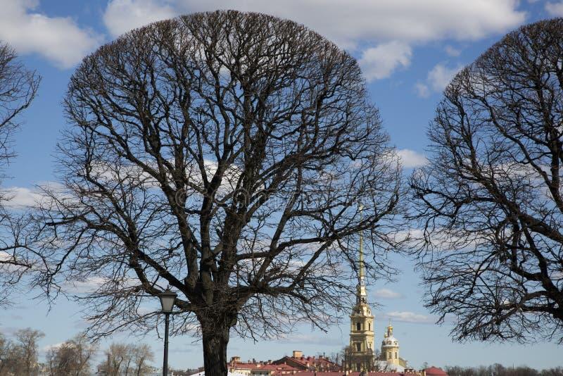 Закрепленные деревья на стрелке острова Vasilievsky стоковые фотографии rf