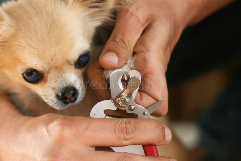Закреплять когти собаки стоковое изображение
