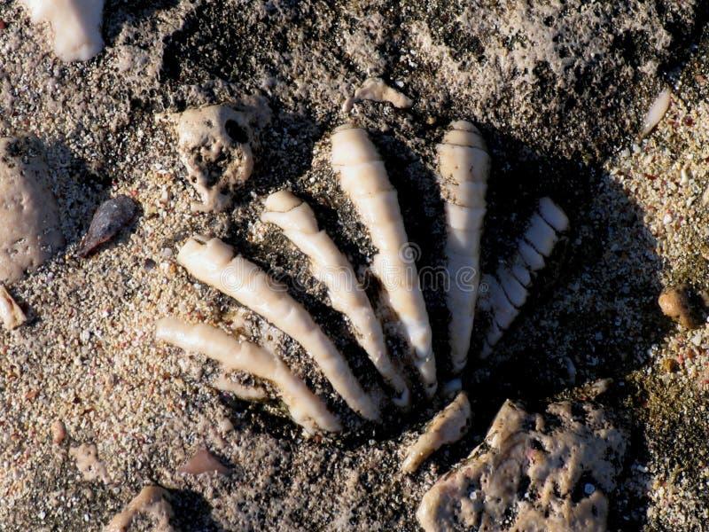 закрепляя изолированная белизна раковины моря путя стоковое фото
