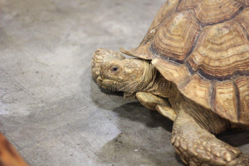 Закройте вверх большой черепахи стоковые фото