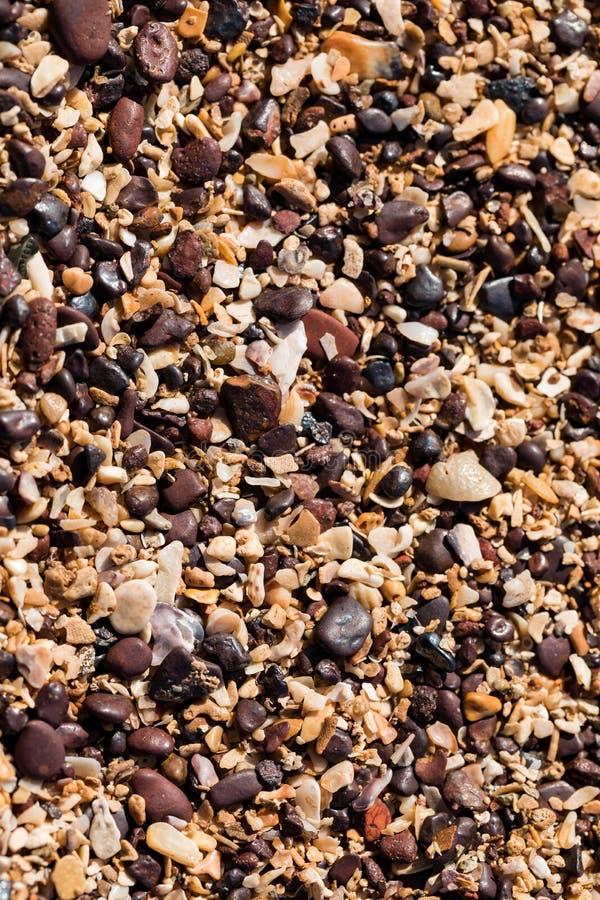 Закройте вверх зерен и раковин песка на пляже стоковое изображение