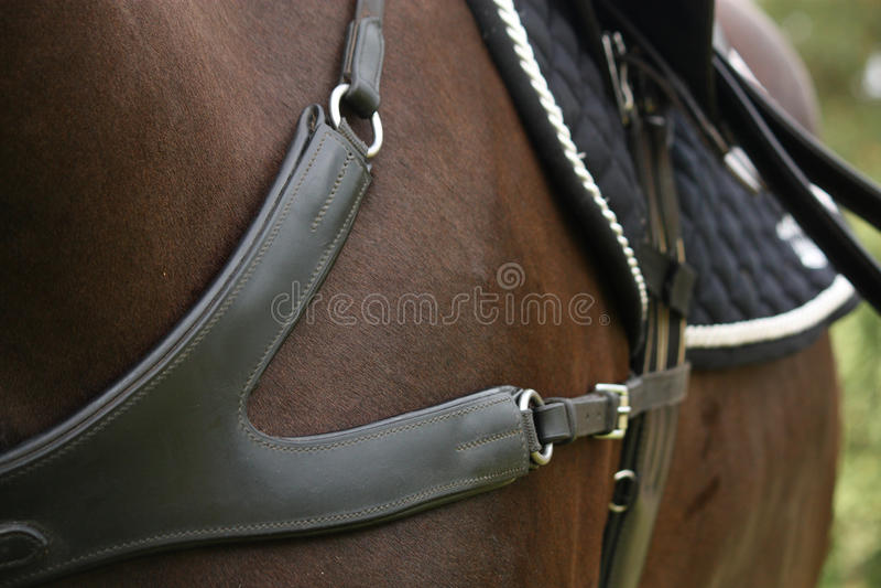 Закройте вверх кожаного equine нагрудника стоковые изображения rf