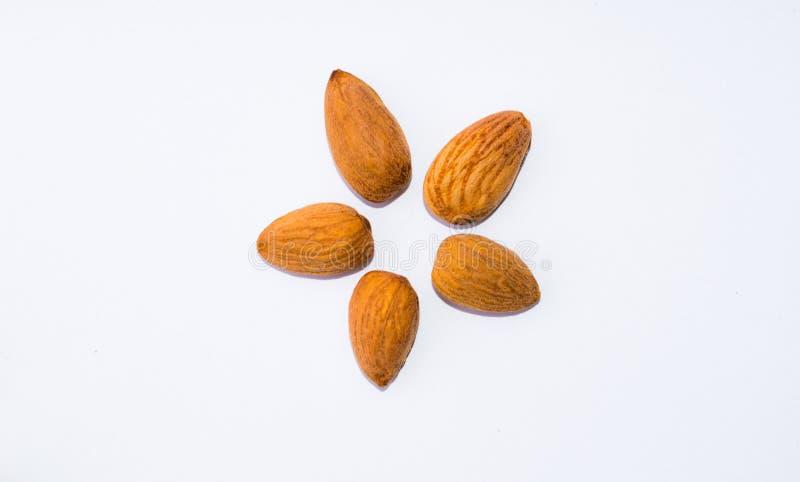 Закройте вверх коричневых семян миндалин изолированных на белой предпосылке стоковая фотография rf