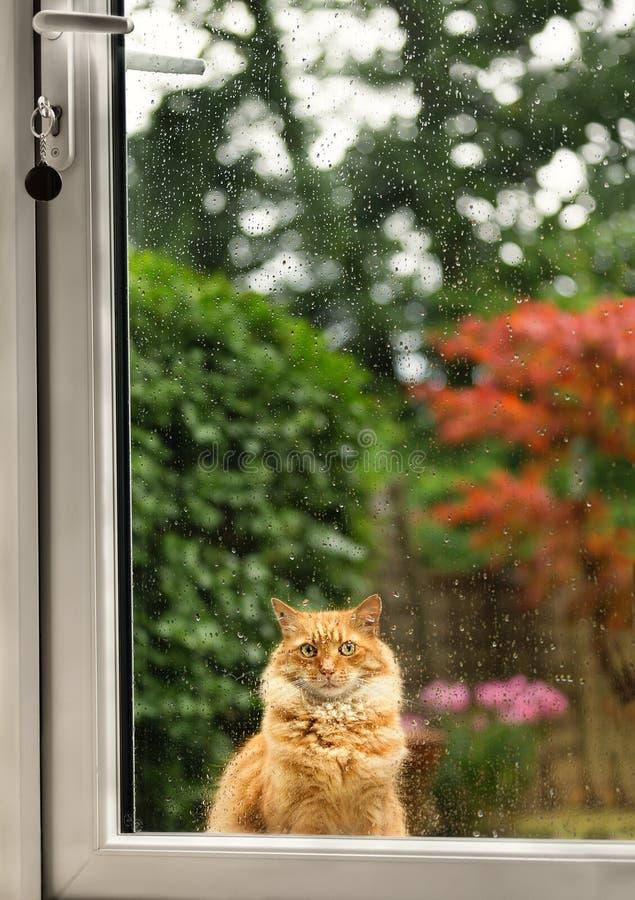 Закройте вверх кота ждать longingly на двери на дождливый день стоковая фотография