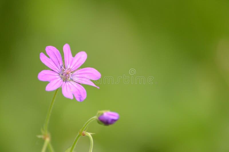 Закройте вверх красивейшего цветка стоковые фотографии rf