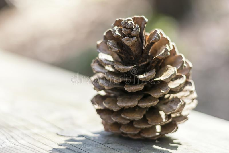 Закройте вверх красивого древообразного pinecone на деревянной поверхности в мягком backlight лета стоковые фотографии rf