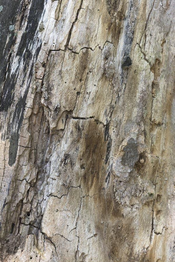 Закройте вверх красивой старой текстурированной коры дерева стоковые изображения rf