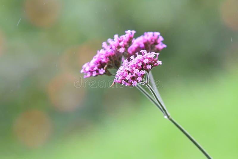 Закройте вверх красивых полевых цветков под светлым ливнем весны стоковое изображение rf