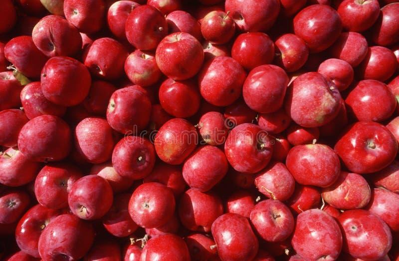 Закройте вверх красных яблок стоковые изображения