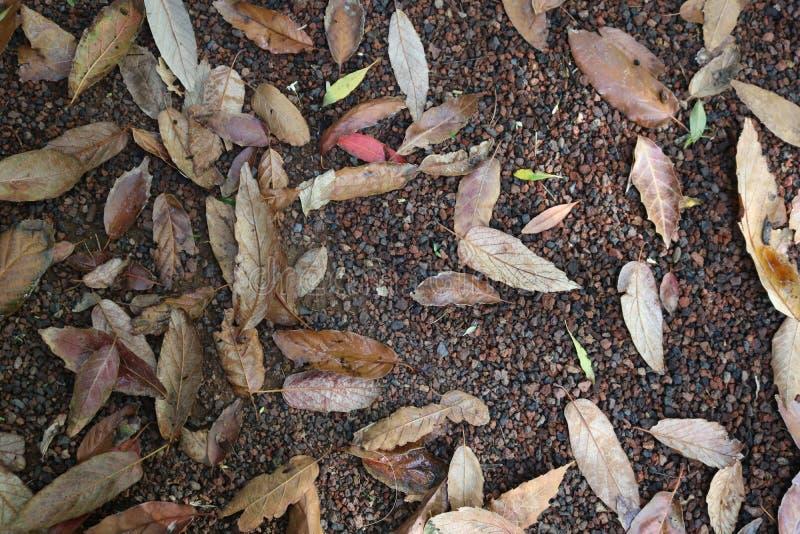 Закройте вверх листьев осени на том основании стоковые изображения rf