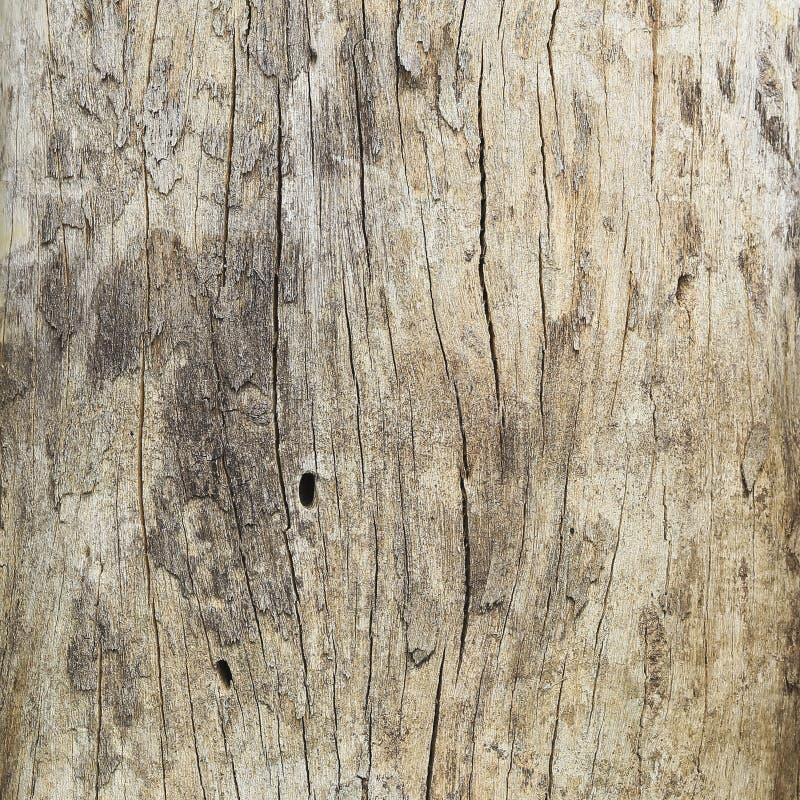 Download Закройте вверх мертвого ствола дерева Стоковое Фото - изображение насчитывающей brougham, конспектов: 37929494