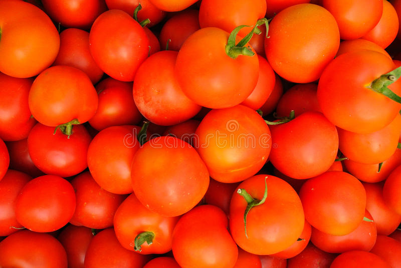 Закройте вверх много свежих красных томатов стоковые фотографии rf