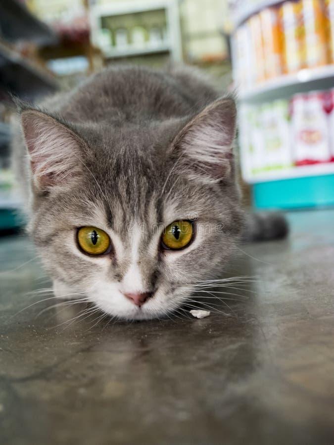 Закройте вверх молодой домашней кошки стоковое фото rf
