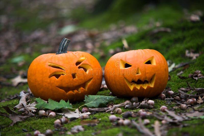 Закройте вверх на тыкве хеллоуина в лесе осени стоковые фото