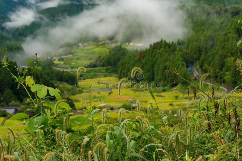 Закройте вверх одичалой травы с террасами поля риса на backgroun стоковое фото rf