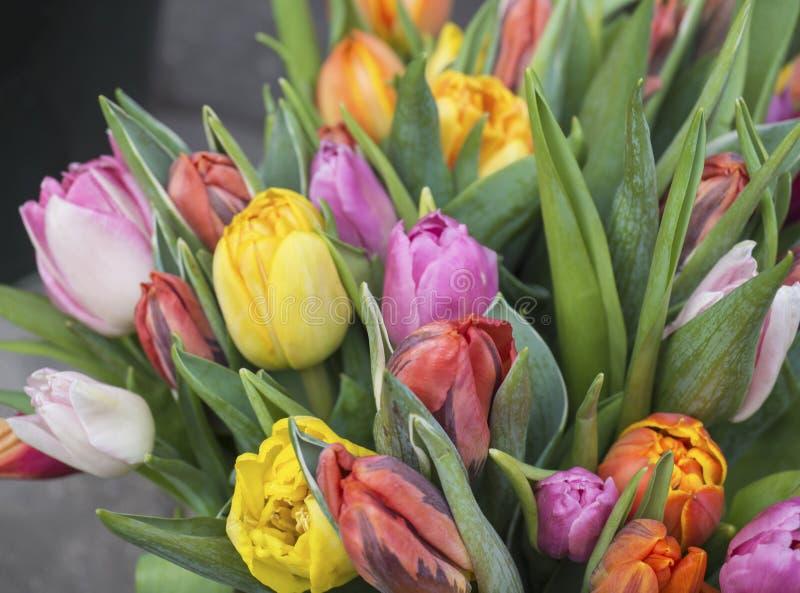 Закройте вверх по букету красочных тюльпанов зацветите, позеленейте листья, отборные стоковые изображения rf