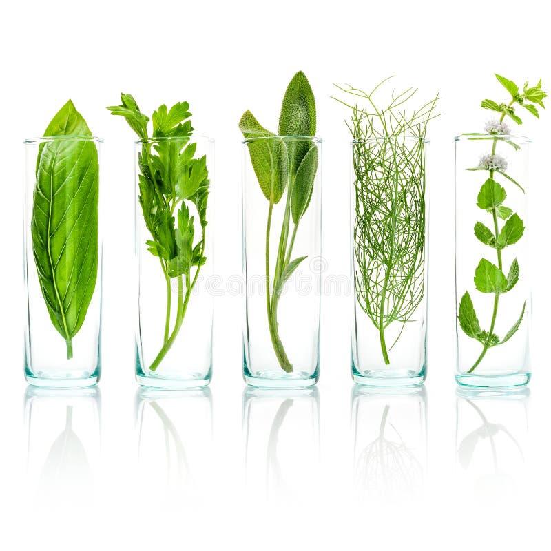 Закройте вверх по бутылкам свежих ароматичных трав Свежая мудрая ветвь, s стоковое изображение rf