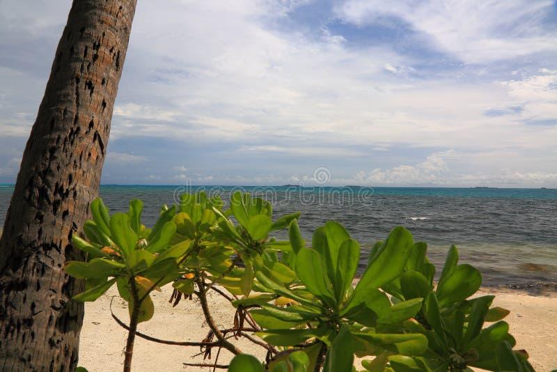 Закройте вверх по взгляду зеленого растения на поверхности фронта и открытого моря и белых облаках на предпосылке стоковые изображения rf