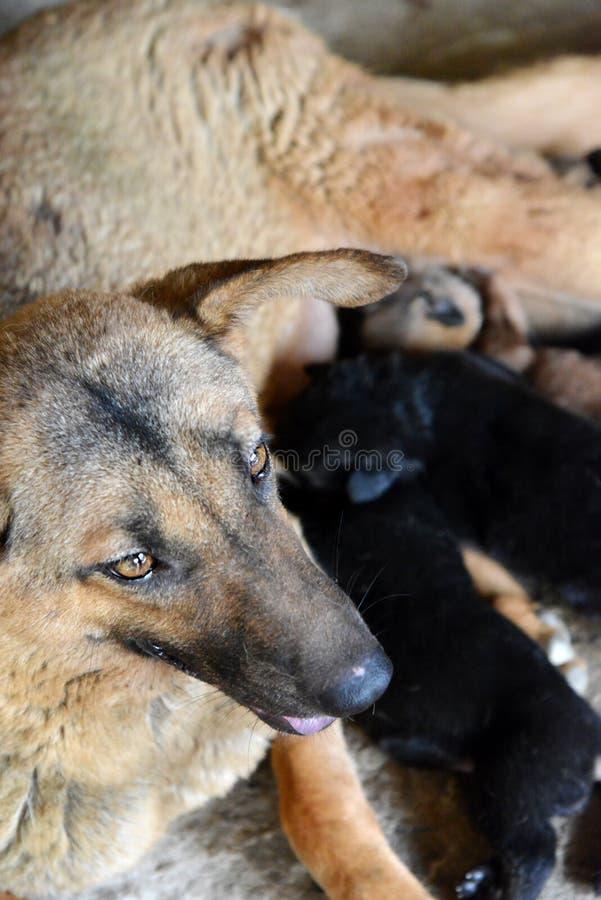 Закройте вверх по головке собаки стоковое фото rf