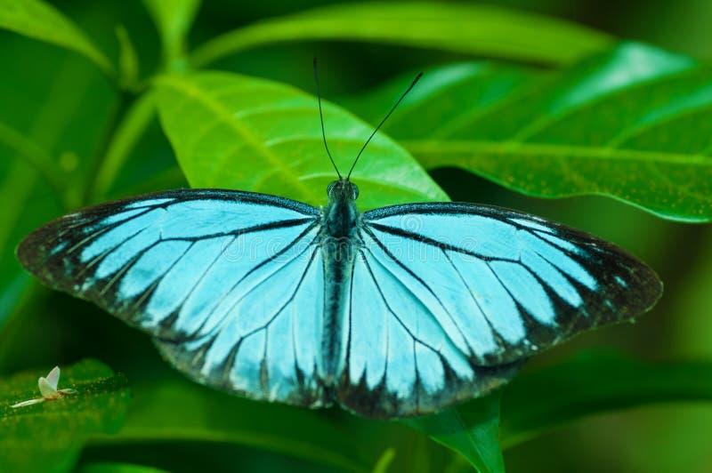 Закройте вверх по голубой бабочке стоковые фото