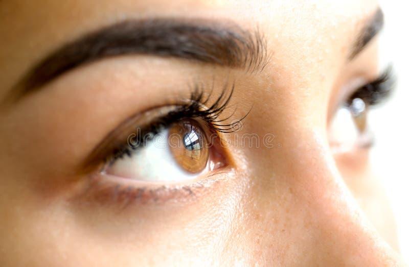 Закройте вверх по женским коричневым глазам с длинными ресницами стоковые фотографии rf