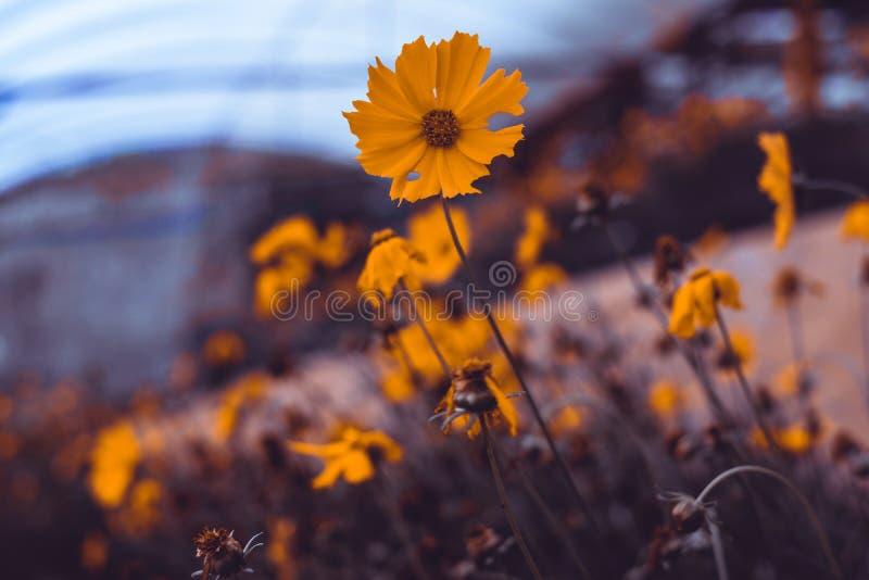 Закройте вверх по изображению полевых цветков стоковая фотография rf