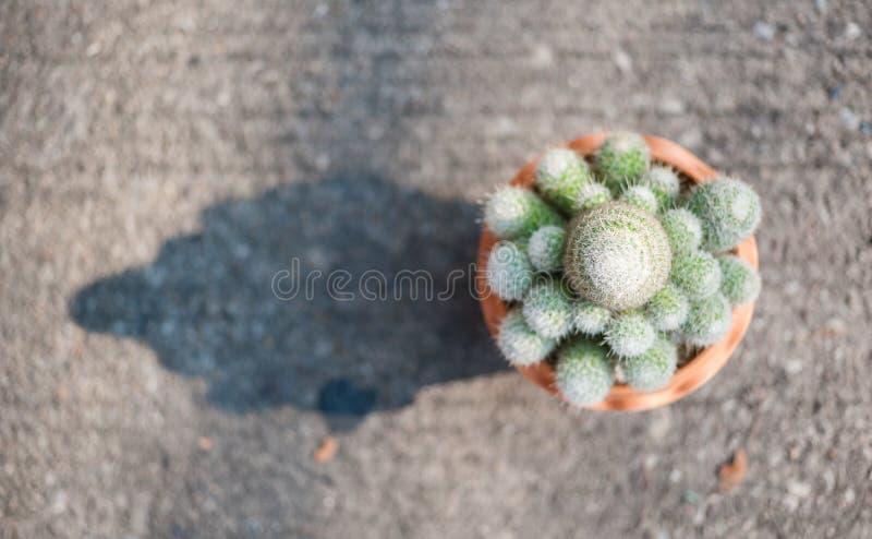 Кактус в цветочном горшке на земле стоковое фото rf