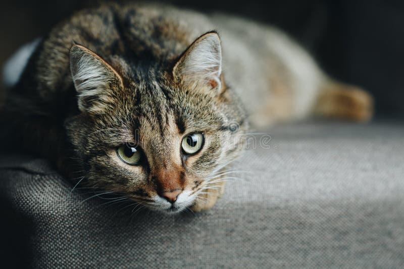 Закройте вверх по коту уснувшему на стуле стоковые изображения