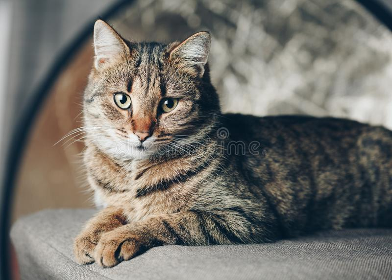Закройте вверх по коту уснувшему на стуле стоковая фотография rf
