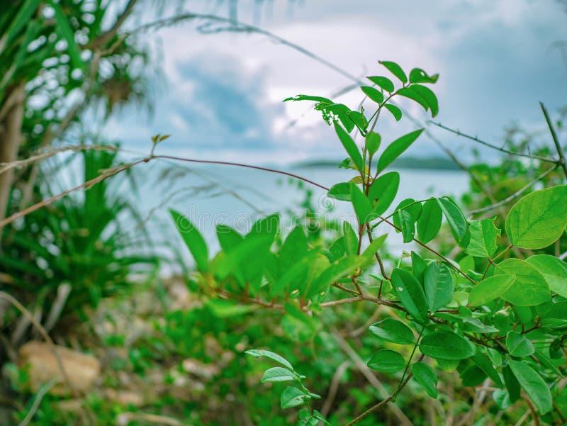 Закройте вверх по малому дереву в парке нации Khao Laem Ya следа природы стоковые изображения rf
