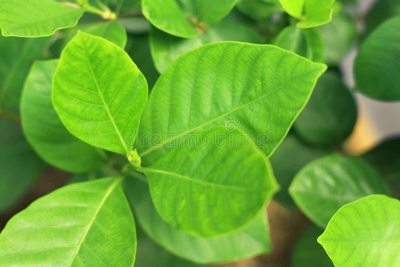 Закройте вверх по молодым зеленым листьям с запачканной предпосылкой стоковая фотография