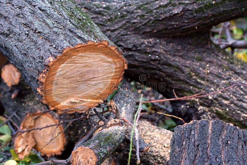Закройте вверх по нескольким валить стволов дерева на земле стоковое фото rf