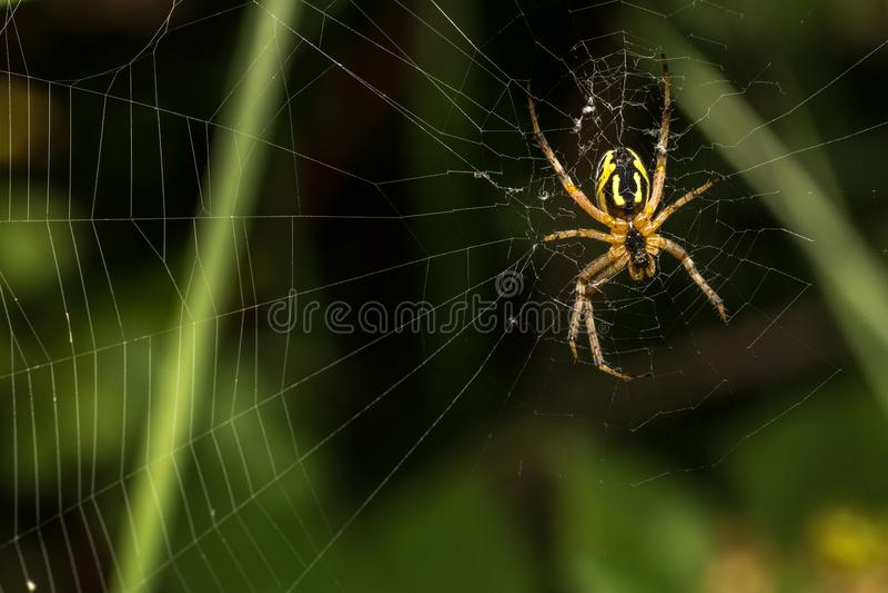 Закройте вверх по пауку и дому стоковое изображение rf