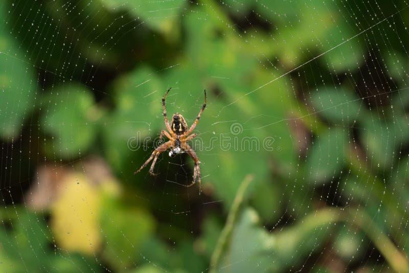 Закройте вверх по пауку и дому стоковое изображение