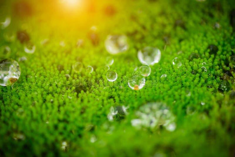 Закройте вверх по падению воды на зеленом mos в национальном парке стоковое фото